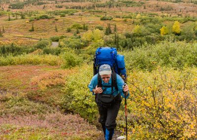 Backpacker in Denali